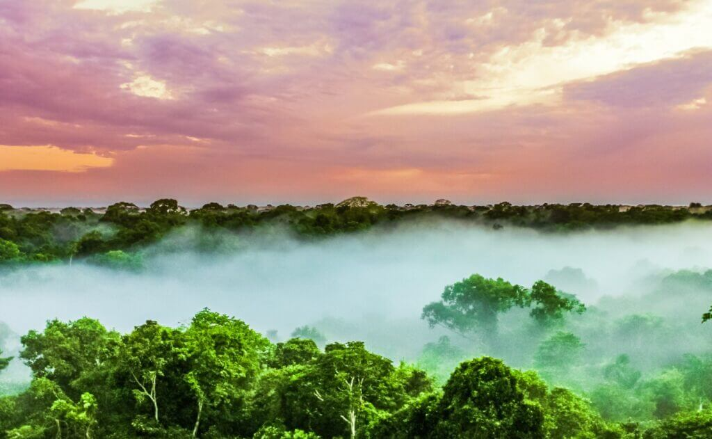 Амазония - родина рапэ